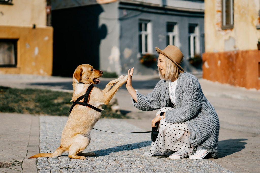 Hund selskab
